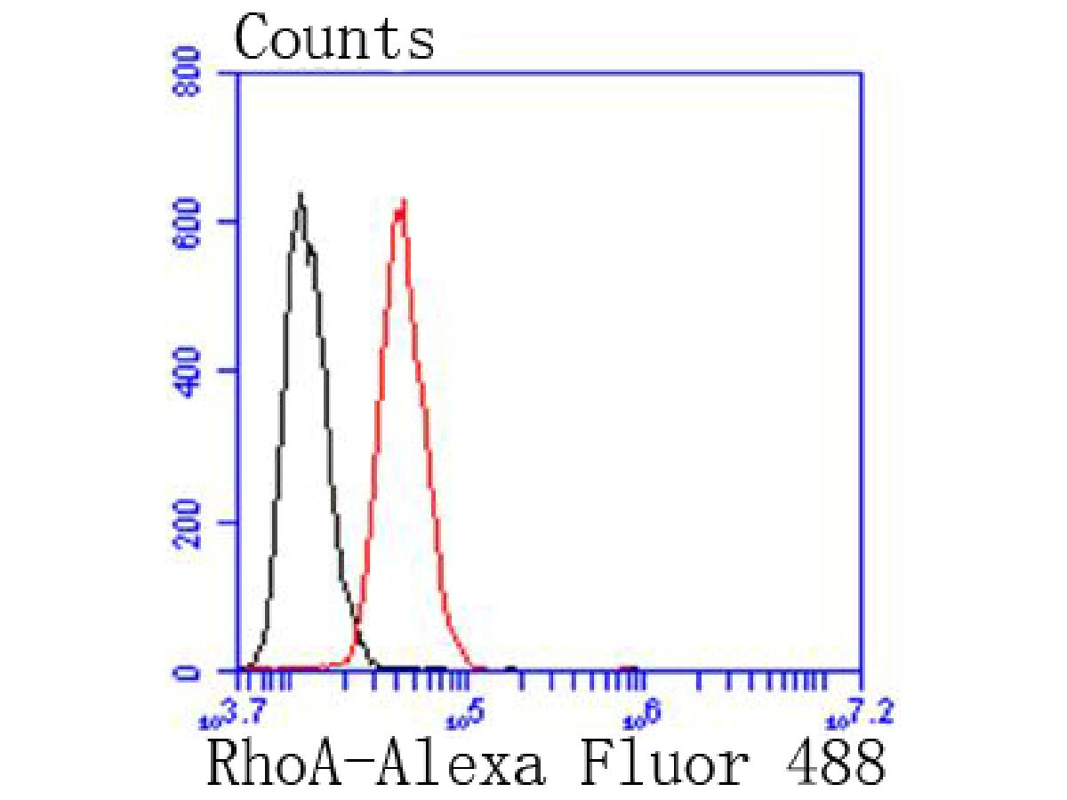Flow cytometric analysis of Hela cells with RhoA antibody at 1/50 dilution (red) compared with an unlabelled control (cells without incubation with primary antibody; black). Alexa Fluor 488-conjugated goat anti rabbit IgG was used as the secondary antibody.