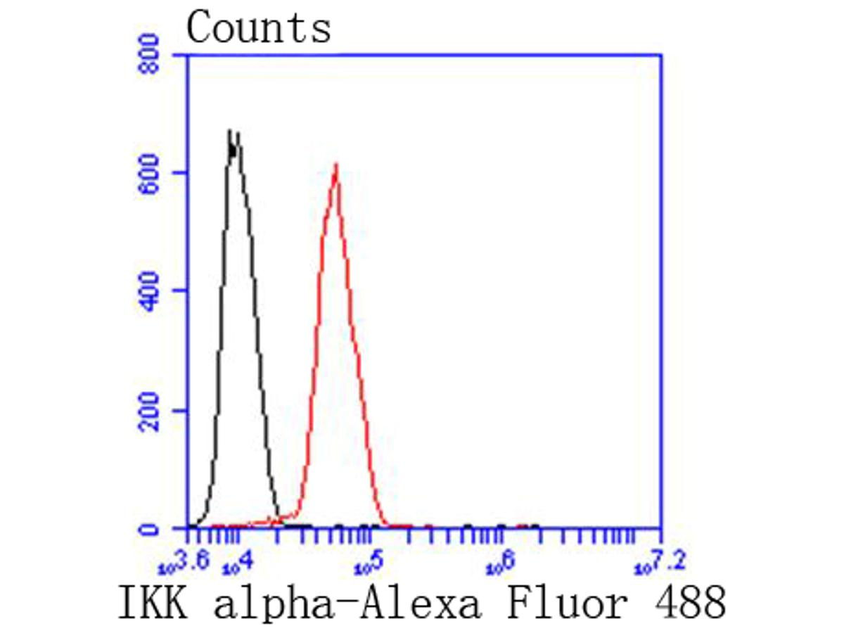 Flow cytometric analysis of IKK alpha was done on Hela cells. The cells were fixed, permeabilized and stained with the primary antibody (ET1611-15, 1/50) (red). After incubation of the primary antibody at room temperature for an hour, the cells were stained with a Alexa Fluor 488-conjugated Goat anti-Rabbit IgG Secondary antibody at 1/1000 dilution for 30 minutes.Unlabelled sample was used as a control (cells without incubation with primary antibody; black).