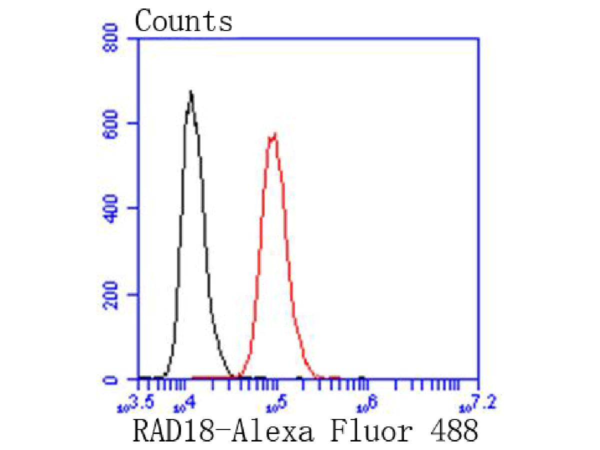 Flow cytometric analysis of Hela cells with RAD18 antibody at 1/50 dilution (red) compared with an unlabelled control (cells without incubation with primary antibody; black). Alexa Fluor 488-conjugated goat anti rabbit IgG was used as the secondary antibody