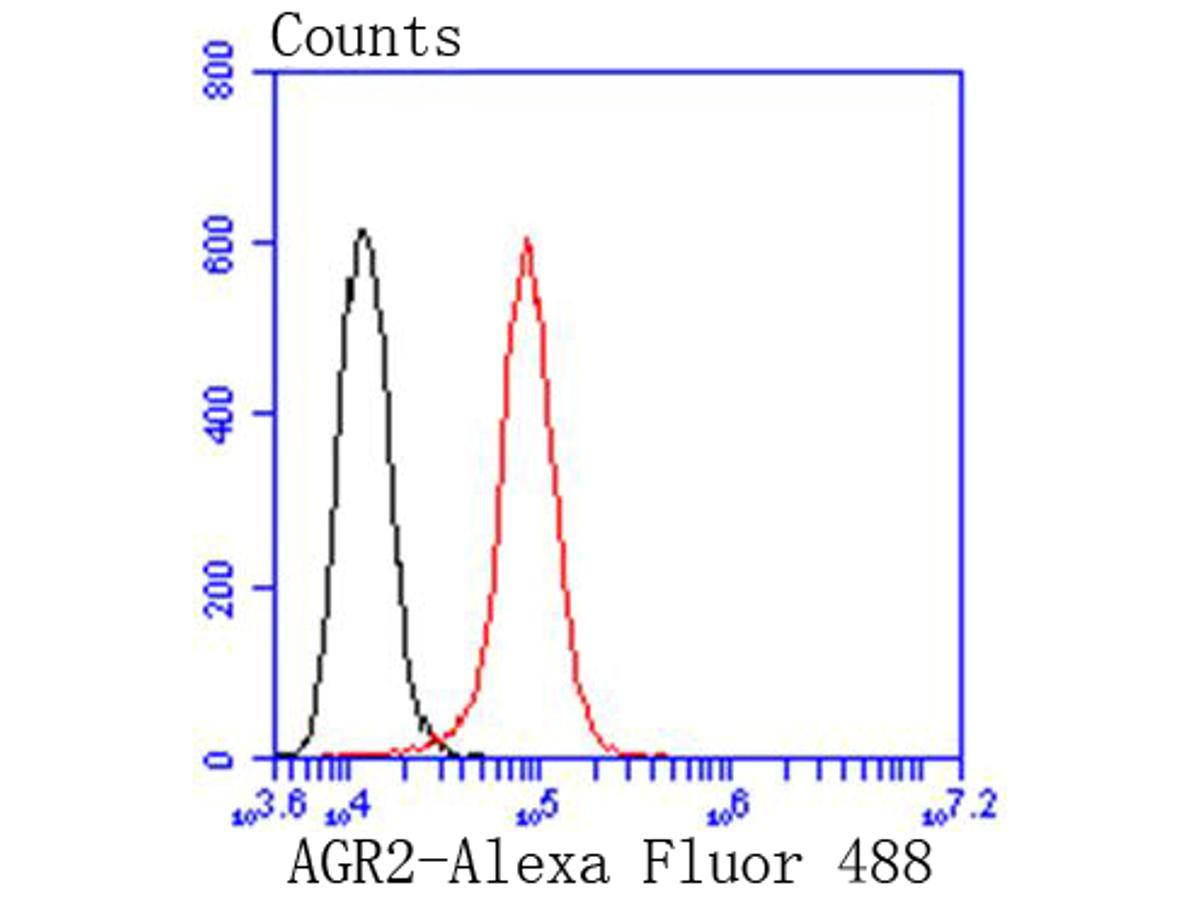 Flow cytometric analysis of AGR2 was done on Hela cells. The cells were fixed, permeabilized and stained with the primary antibody (ET1611-36, 1/50) (red). After incubation of the primary antibody at room temperature for an hour, the cells were stained with a Alexa Fluor 488-conjugated Goat anti-Rabbit IgG Secondary antibody at 1/1000 dilution for 30 minutes.Unlabelled sample was used as a control (cells without incubation with primary antibody; black).
