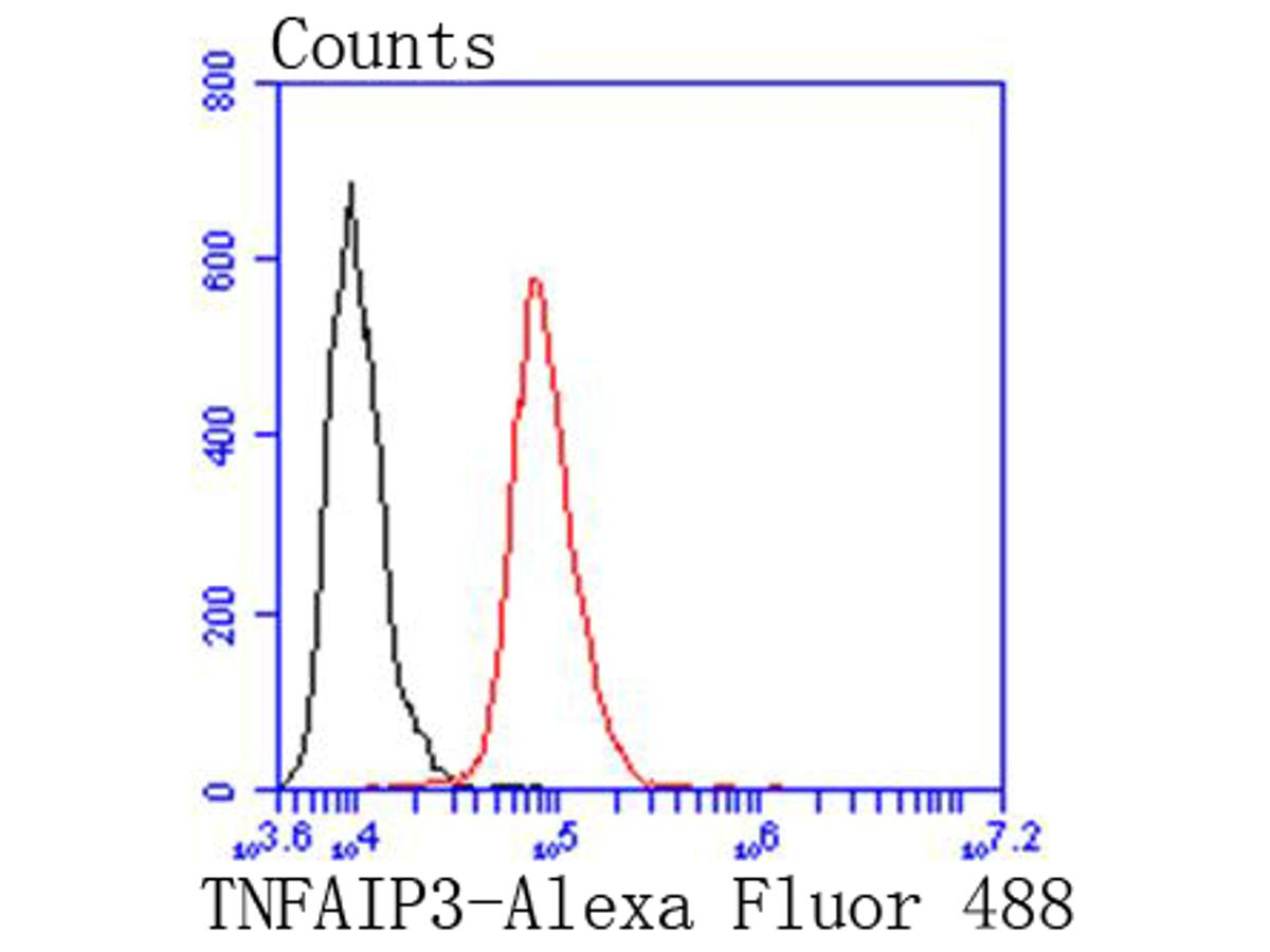Flow cytometric analysis of TNFAIP3 was done on HepG2 cells. The cells were fixed, permeabilized and stained with the primary antibody (ET1611-40, 1/50) (red). After incubation of the primary antibody at room temperature for an hour, the cells were stained with a Alexa Fluor 488-conjugated Goat anti-Rabbit IgG Secondary antibody at 1/1000 dilution for 30 minutes.Unlabelled sample was used as a control (cells without incubation with primary antibody; black).