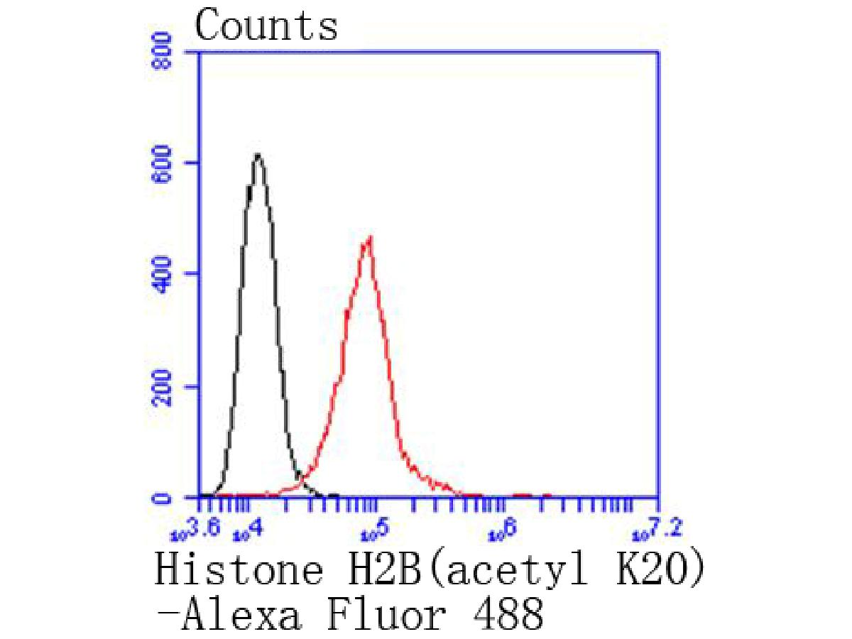 Flow cytometric analysis of Hela cells with Histone H2B(acetyl K20) antibody at 1/50 dilution (red) compared with an unlabelled control (cells without incubation with primary antibody; black). Alexa Fluor 488-conjugated goat anti rabbit IgG was use