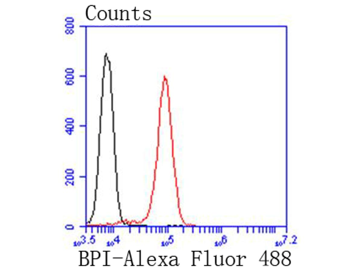 Flow cytometric analysis of Jurkat cells with BPI antibody at 1/50 dilution (red) compared with an unlabelled control (cells without incubation with primary antibody; black). Alexa Fluor 488-conjugated goat anti rabbit IgG was used as the secondary antibody.