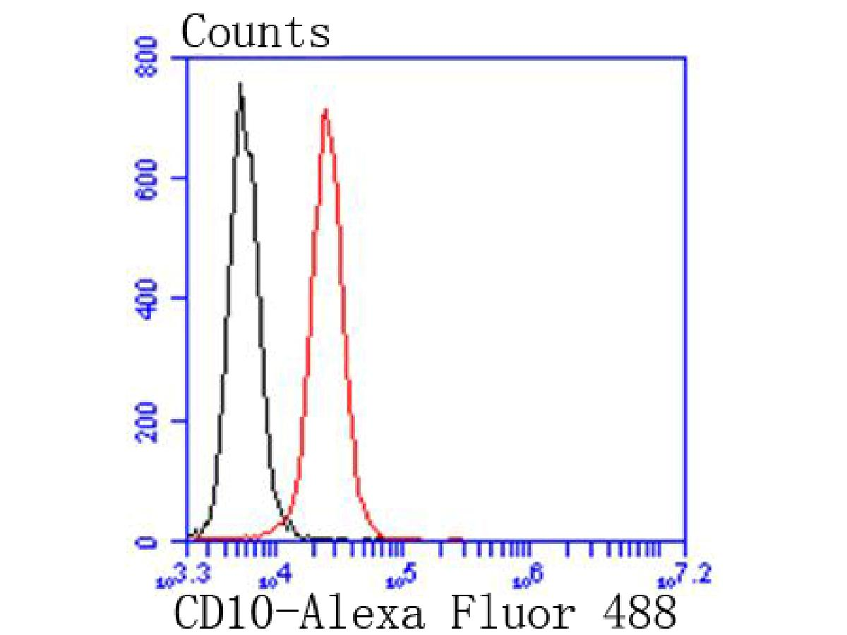Flow cytometric analysis of CD10 was done on Jurkat cells. The cells were fixed, permeabilized and stained with the primary antibody (ET1611-82, 1/50) (red). After incubation of the primary antibody at room temperature for an hour, the cells were stained with a Alexa Fluor 488-conjugated Goat anti-Rabbit IgG Secondary antibody at 1/1000 dilution for 30 minutes.Unlabelled sample was used as a control (cells without incubation with primary antibody; black).
