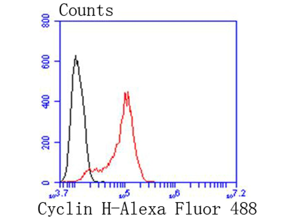 Flow cytometric analysis of Hela cells with Cyclin H antibody at 1/50 dilution (red) compared with an unlabelled control (cells without incubation with primary antibody; black). Alexa Fluor 488-conjugated goat anti rabbit IgG was used as the secondary antibody.