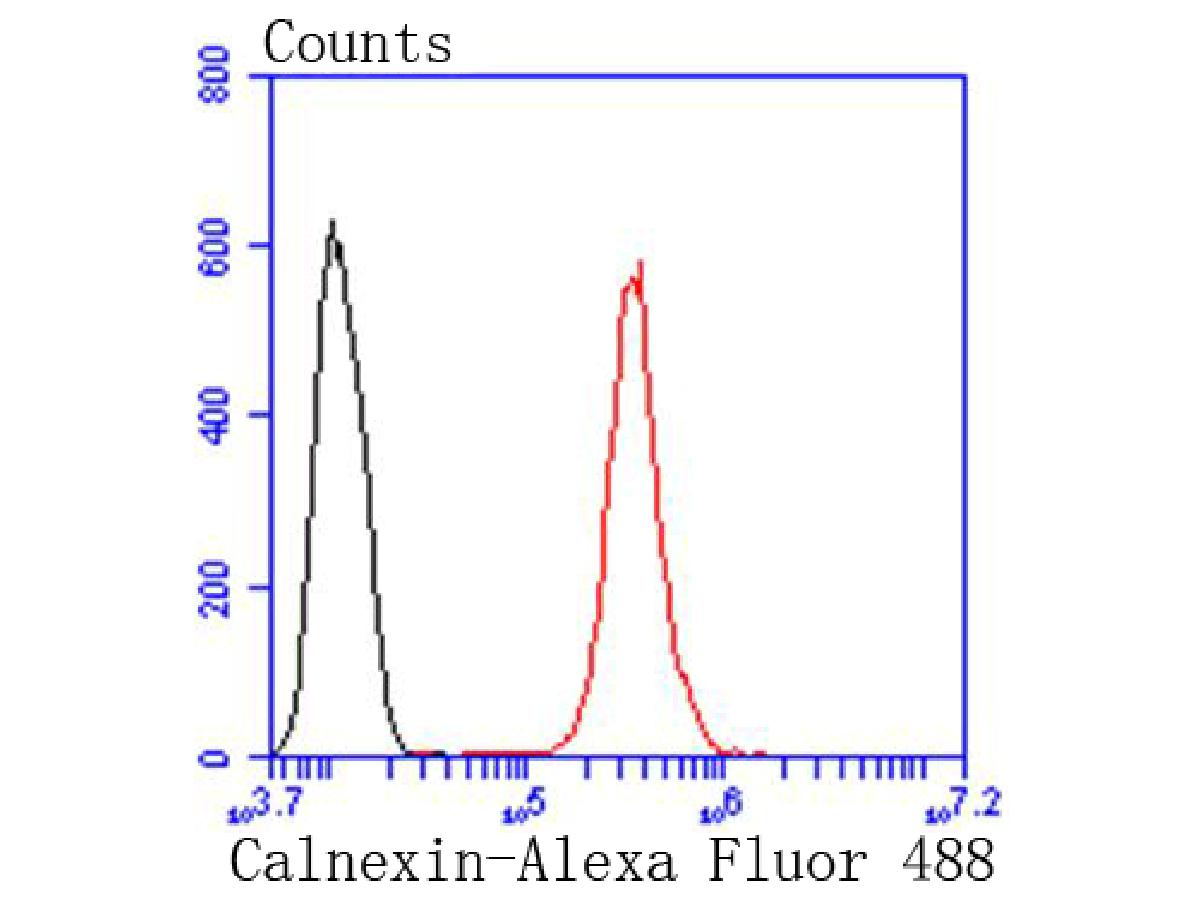 Flow cytometric analysis of Calnexin was done on Hela cells. The cells were fixed, permeabilized and stained with the primary antibody (ET1611-86, 1/50) (red). After incubation of the primary antibody at room temperature for an hour, the cells were stained with a Alexa Fluor 488-conjugated Goat anti-Rabbit IgG Secondary antibody at 1/1000 dilution for 30 minutes.Unlabelled sample was used as a control (cells without incubation with primary antibody; black).
