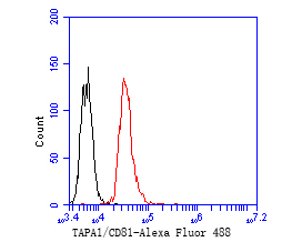 Flow cytometric analysis of TAPA1/CD81 was done on Jurkat cells. The cells were fixed, permeabilized and stained with the primary antibody (ET1611-87, 1/50) (red). After incubation of the primary antibody at room temperature for an hour, the cells were stained with a Alexa Fluor 488-conjugated Goat anti-Rabbit IgG Secondary antibody at 1/1000 dilution for 30 minutes.Unlabelled sample was used as a control (cells without incubation with primary antibody; black).