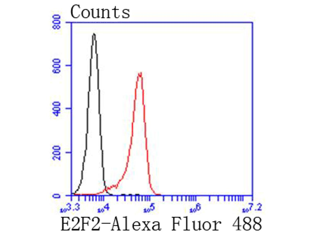 Flow cytometric analysis of K562 cells with E2F2 antibody at 1/50 dilution (red) compared with an unlabelled control (cells without incubation with primary antibody; black). Alexa Fluor 488-conjugated goat anti rabbit IgG was used as the secondary antibody