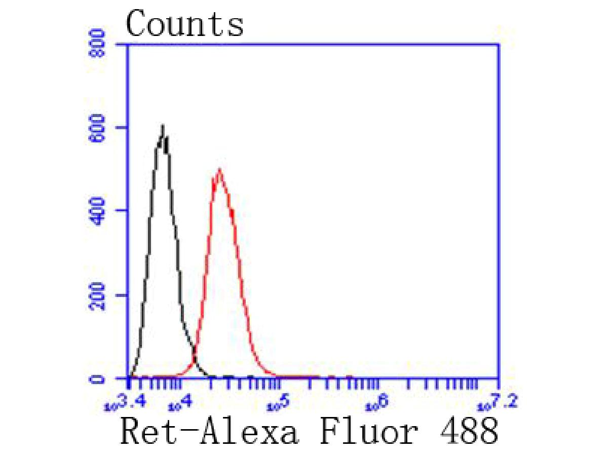 Flow cytometric analysis of SW480 cells with Ret antibody at 1/50 dilution (red) compared with an unlabelled control (cells without incubation with primary antibody; black). Alexa Fluor 488-conjugated goat anti rabbit IgG was used as the secondary antibody.
