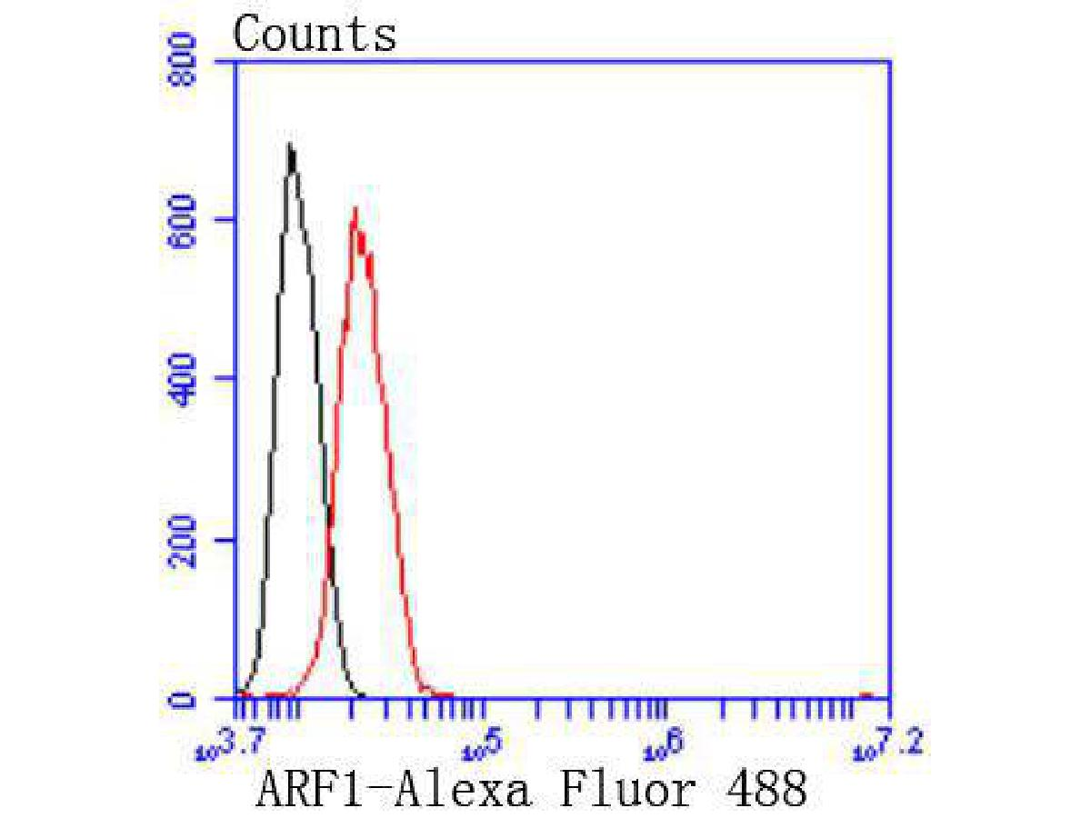 Flow cytometric analysis of Hela cells with ARF1 antibody at 1/50 dilution (red) compared with an unlabelled control (cells without incubation with primary antibody; black). Alexa Fluor 488-conjugated goat anti rabbit IgG was used as the secondary antibody