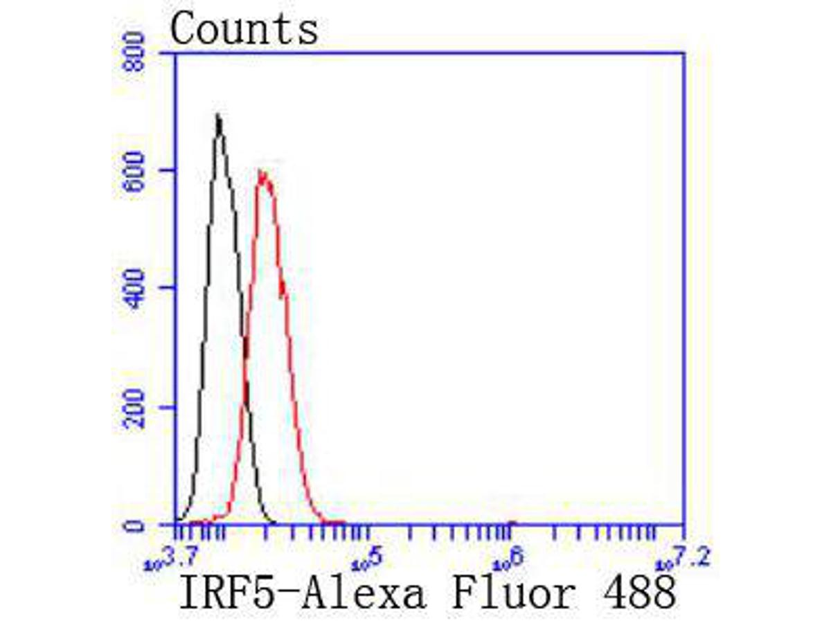 Flow cytometric analysis of IRF5 was done on Hela cells. The cells were fixed, permeabilized and stained with the primary antibody (ET1612-15, 1/50) (red). After incubation of the primary antibody at room temperature for an hour, the cells were stained with a Alexa Fluor 488-conjugated Goat anti-Rabbit IgG Secondary antibody at 1/1000 dilution for 30 minutes.Unlabelled sample was used as a control (cells without incubation with primary antibody; black).