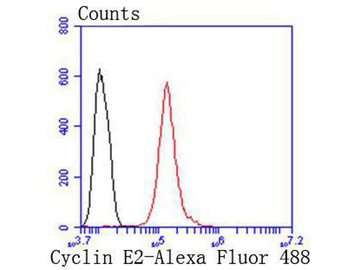 Flow cytometric analysis of Cyclin E2 was done on Hela cells. The cells were fixed, permeabilized and stained with the primary antibody (ET1612-17, 1/50) (red). After incubation of the primary antibody at room temperature for an hour, the cells were stained with a Alexa Fluor 488-conjugated Goat anti-Rabbit IgG Secondary antibody at 1/1000 dilution for 30 minutes.Unlabelled sample was used as a control (cells without incubation with primary antibody; black).