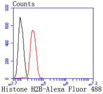 Flow cytometric analysis of Histone H2B was done on Hela cells. The cells were fixed, permeabilized and stained with the primary antibody (ET1612-25, 1/50) (red). After incubation of the primary antibody at room temperature for an hour, the cells were stained with a Alexa Fluor 488-conjugated Goat anti-Rabbit IgG Secondary antibody at 1/1000 dilution for 30 minutes.Unlabelled sample was used as a control (cells without incubation with primary antibody; black).