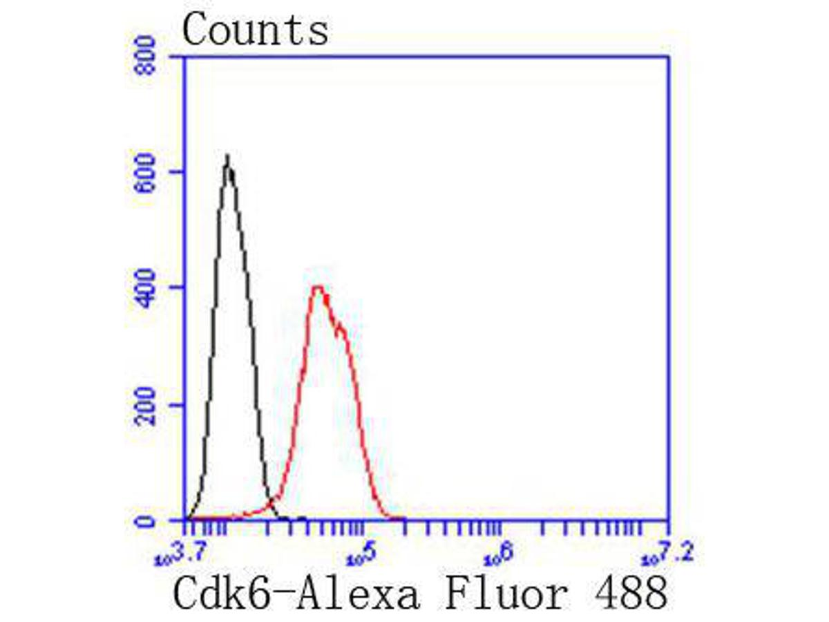 Flow cytometric analysis of Cdk6 was done on Hela cells. The cells were fixed, permeabilized and stained with the primary antibody (ET1612-3, 1/50) (red). After incubation of the primary antibody at room temperature for an hour, the cells were stained with a Alexa Fluor 488-conjugated Goat anti-Rabbit IgG Secondary antibody at 1/1000 dilution for 30 minutes.Unlabelled sample was used as a control (cells without incubation with primary antibody; black).
