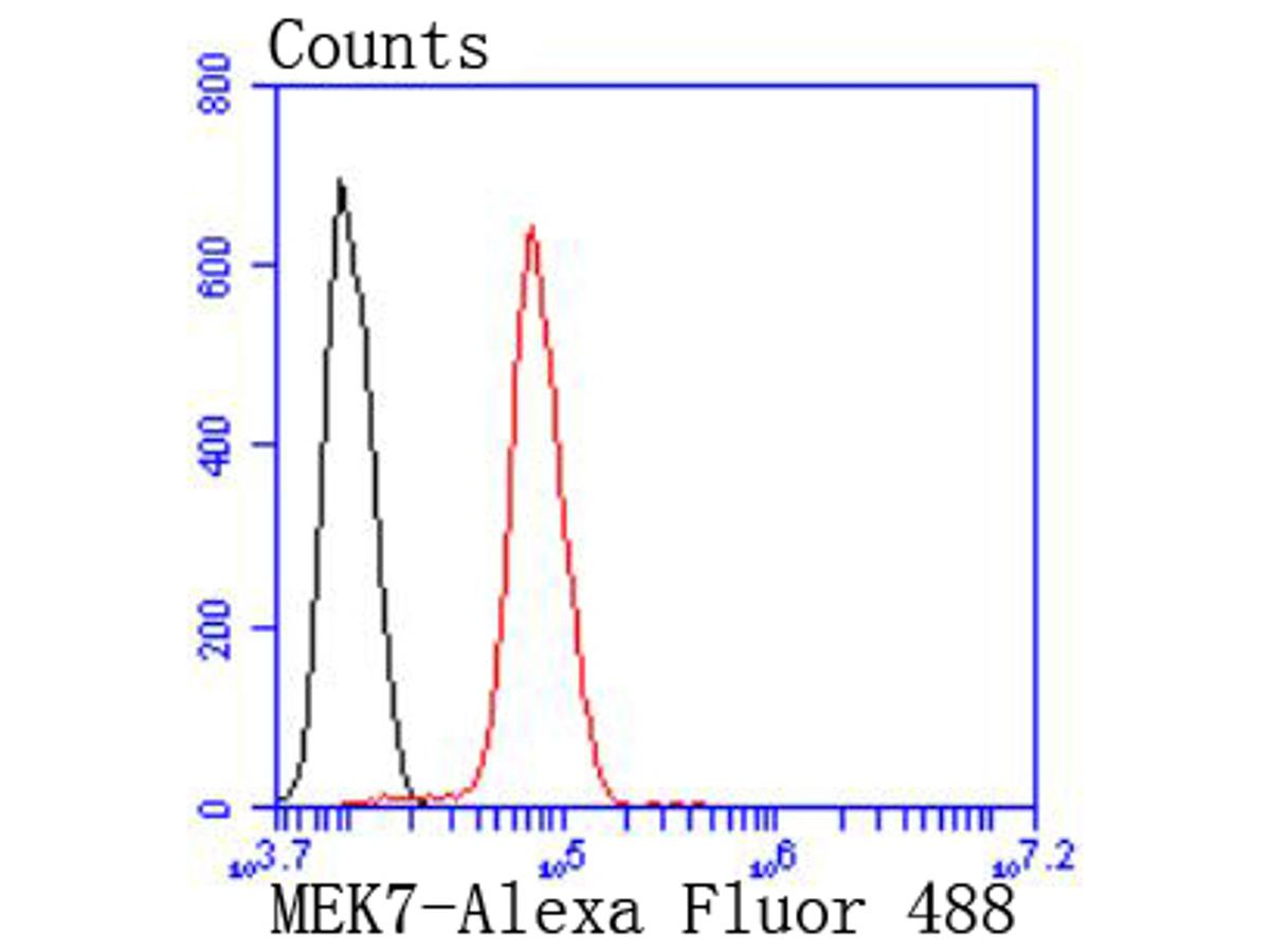 Flow cytometric analysis of Hela cells with MEK7 antibody at 1/50 dilution (red) compared with an unlabelled control (cells without incubation with primary antibody; black). Alexa Fluor 488-conjugated goat anti rabbit IgG was used as the secondary antibody.