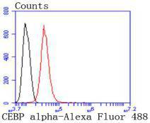 Flow cytometric analysis of CEBP alpha was done on Hela cells. The cells were fixed, permeabilized and stained with the primary antibody (ET1612-46, 1/50) (red). After incubation of the primary antibody at room temperature for an hour, the cells were stained with a Alexa Fluor 488-conjugated Goat anti-Rabbit IgG Secondary antibody at 1/1000 dilution for 30 minutes.Unlabelled sample was used as a control (cells without incubation with primary antibody; black).