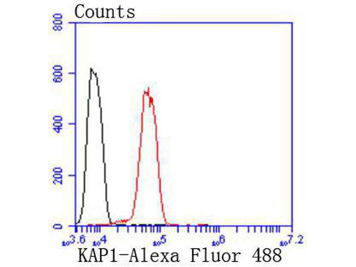 Flow cytometric analysis of KAP1 was done on Hela cells. The cells were fixed, permeabilized and stained with the primary antibody (ET1612-55, 1/50) (red). After incubation of the primary antibody at room temperature for an hour, the cells were stained with a Alexa Fluor 488-conjugated Goat anti-Rabbit IgG Secondary antibody at 1/1000 dilution for 30 minutes.Unlabelled sample was used as a control (cells without incubation with primary antibody; black).
