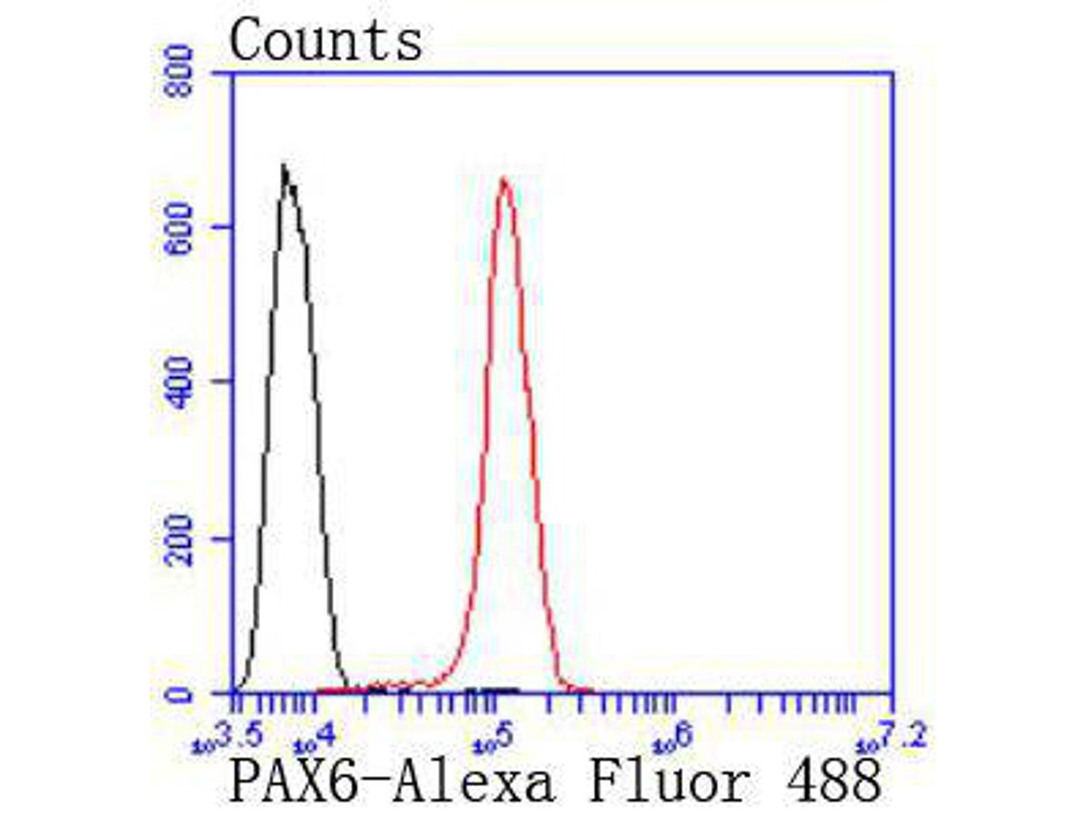 Flow cytometric analysis of PAX6 was done on SH-SY5Y cells. The cells were fixed, permeabilized and stained with the primary antibody (ET1612-58, 1/50) (red). After incubation of the primary antibody at room temperature for an hour, the cells were stained with a Alexa Fluor 488-conjugated Goat anti-Rabbit IgG Secondary antibody at 1/1000 dilution for 30 minutes.Unlabelled sample was used as a control (cells without incubation with primary antibody; black).