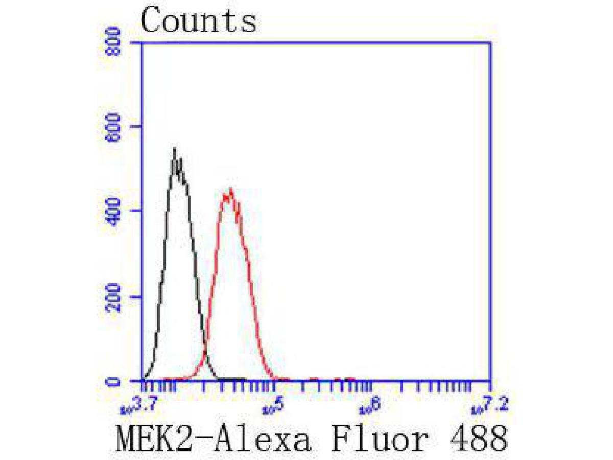 Flow cytometric analysis of Hela cells with MEK2 antibody at 1/50 dilution (red) compared with an unlabelled control (cells without incubation with primary antibody; black). Alexa Fluor 488-conjugated goat anti rabbit IgG was used as the secondary antibody.