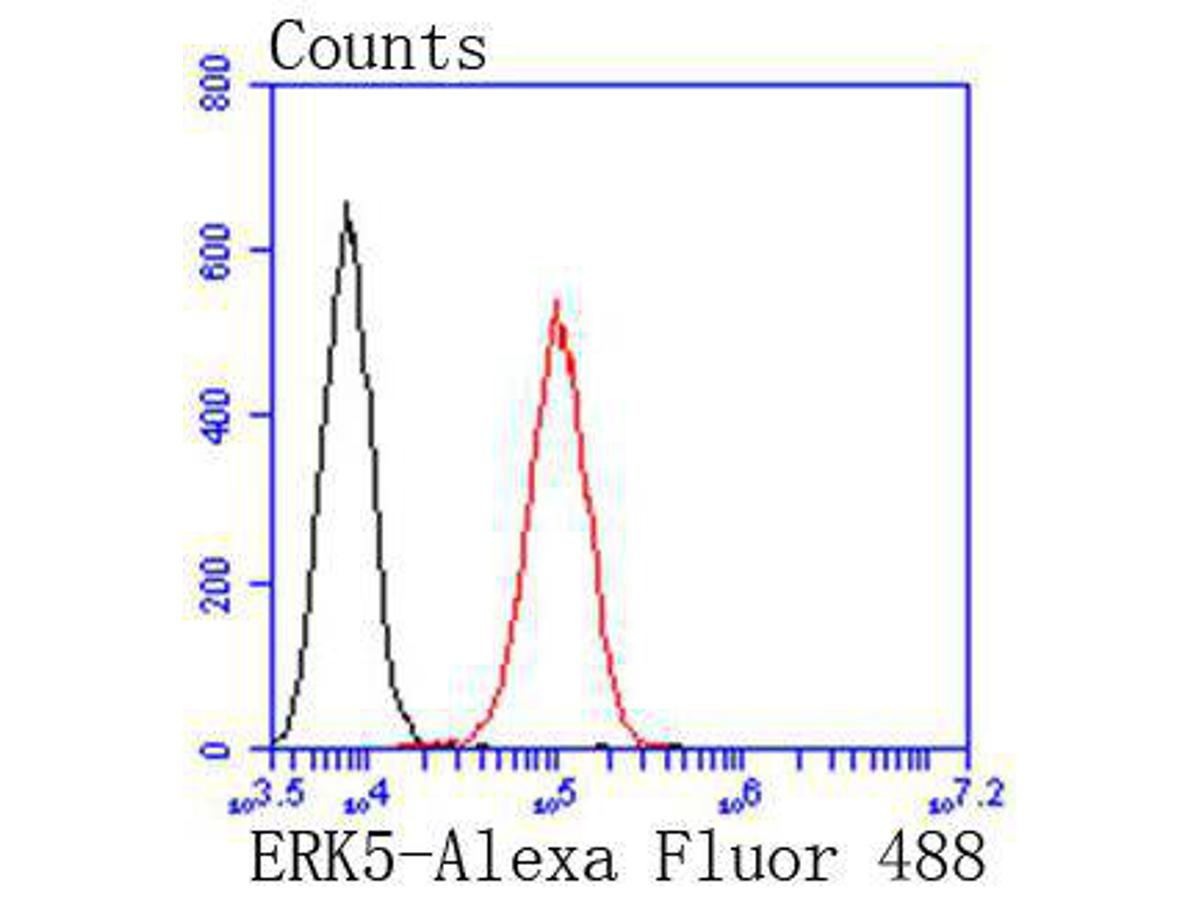 Flow cytometric analysis of ERK5 was done on A549 cells. The cells were fixed, permeabilized and stained with the primary antibody (ET1612-7, 1/50) (red). After incubation of the primary antibody at room temperature for an hour, the cells were stained with a Alexa Fluor 488-conjugated Goat anti-Rabbit IgG Secondary antibody at 1/1000 dilution for 30 minutes.Unlabelled sample was used as a control (cells without incubation with primary antibody; black).