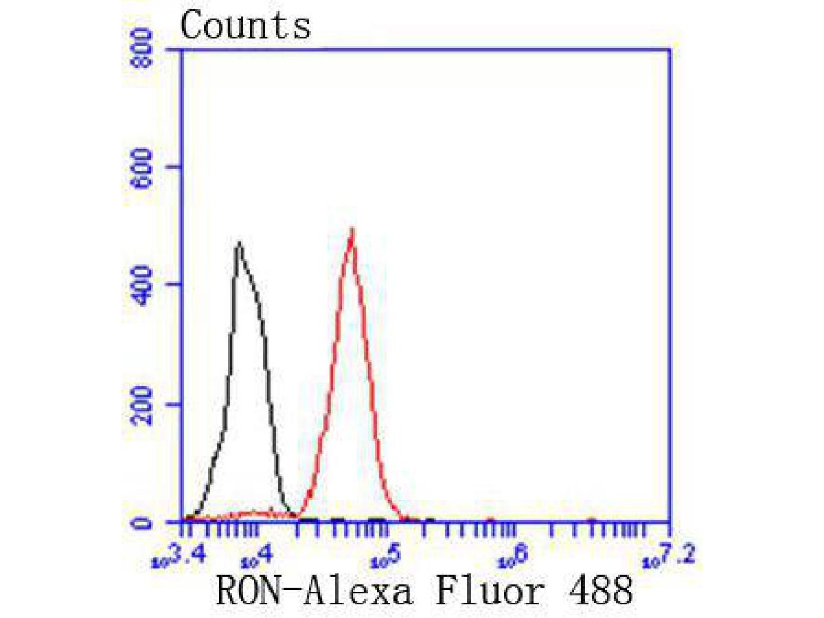 Flow cytometric analysis of RON was done on THP-1 cells. The cells were fixed, permeabilized and stained with the primary antibody (ET1612-80, 1/50) (red). After incubation of the primary antibody at room temperature for an hour, the cells were stained with a Alexa Fluor 488-conjugated Goat anti-Rabbit IgG Secondary antibody at 1/1000 dilution for 30 minutes.Unlabelled sample was used as a control (cells without incubation with primary antibody; black).