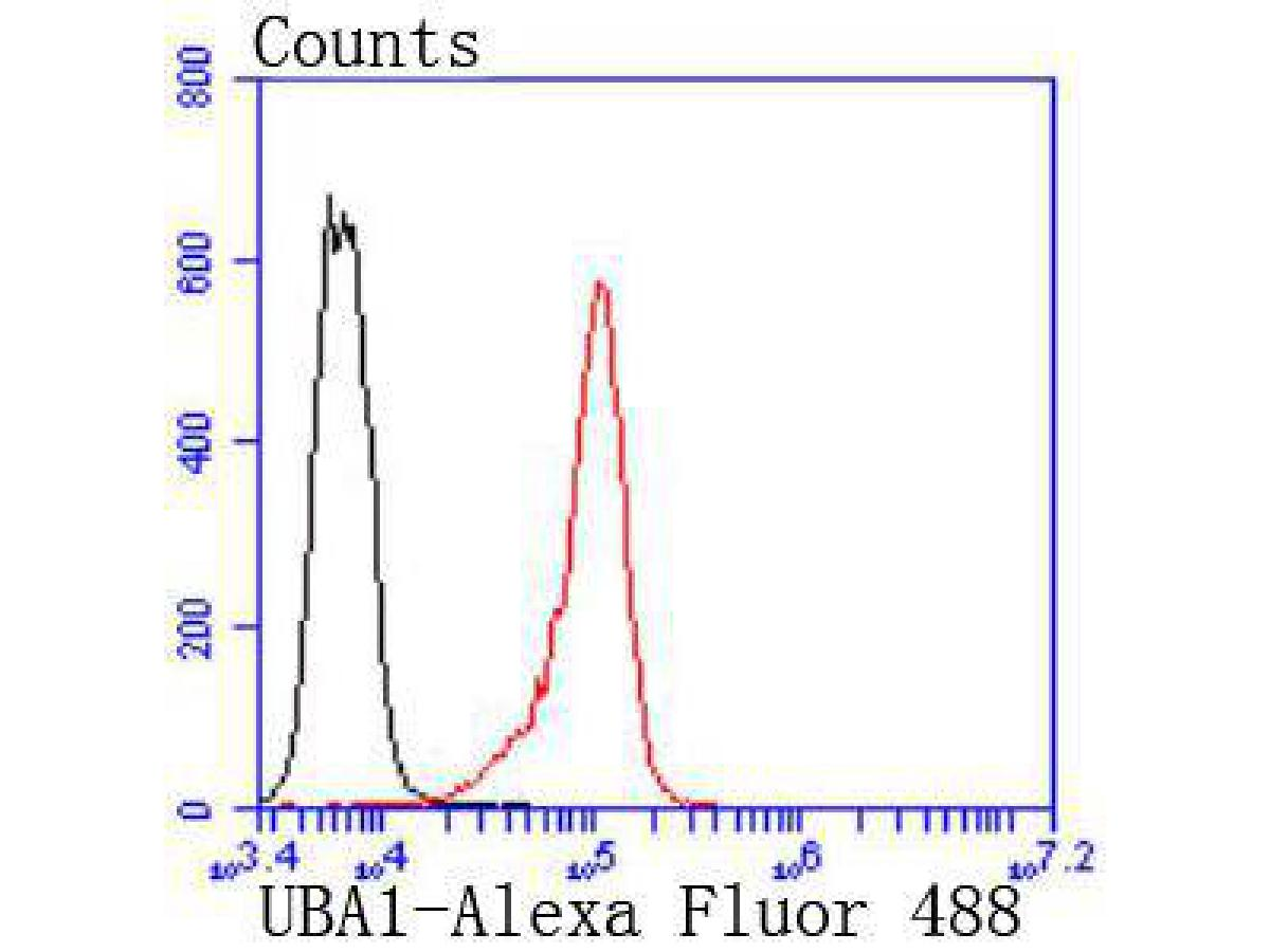 Flow cytometric analysis of Ubiquitin-like modifier-activating enzyme 1 was done on K562 cells. The cells were fixed, permeabilized and stained with the primary antibody (ET1612-82, 1/50) (red). After incubation of the primary antibody at room temperature for an hour, the cells were stained with a Alexa Fluor 488-conjugated Goat anti-Rabbit IgG Secondary antibody at 1/1000 dilution for 30 minutes.Unlabelled sample was used as a control (cells without incubation with primary antibody; black).