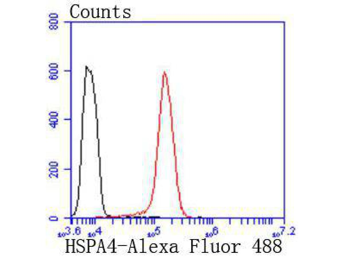 Flow cytometric analysis of Hela cells with HSPA4 antibody at 1/50 dilution (red) compared with an unlabelled control (cells without incubation with primary antibody; black). Alexa Fluor 488-conjugated goat anti rabbit IgG was used as the secondary antibody.
