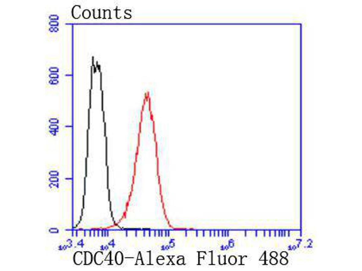 Flow cytometric analysis of K562 cells with CDC40 antibody at 1/50 dilution (red) compared with an unlabelled control (cells without incubation with primary antibody; black). Alexa Fluor 488-conjugated goat anti rabbit IgG was used as the secondary antibody.