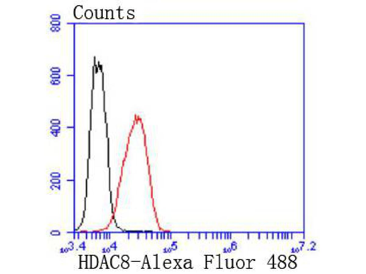 Flow cytometric analysis of HDAC8 was done on K562 cells. The cells were fixed, permeabilized and stained with the primary antibody (ET1612-90, 1/50) (red). After incubation of the primary antibody at room temperature for an hour, the cells were stained with a Alexa Fluor 488-conjugated Goat anti-Rabbit IgG Secondary antibody at 1/1000 dilution for 30 minutes.Unlabelled sample was used as a control (cells without incubation with primary antibody; black).