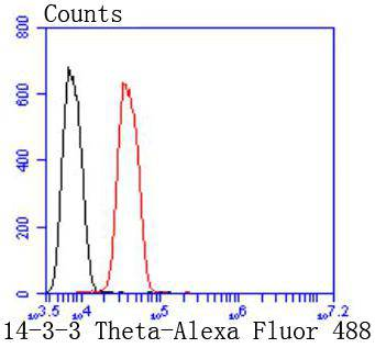 Flow cytometric analysis of 14-3-3 Theta was done on SH-SY5Y cells. The cells were fixed, permeabilized and stained with the primary antibody (ET1612-97, 1/50) (red). After incubation of the primary antibody at room temperature for an hour, the cells were stained with a Alexa Fluor 488-conjugated Goat anti-Rabbit IgG Secondary antibody at 1/1000 dilution for 30 minutes.Unlabelled sample was used as a control (cells without incubation with primary antibody; black).