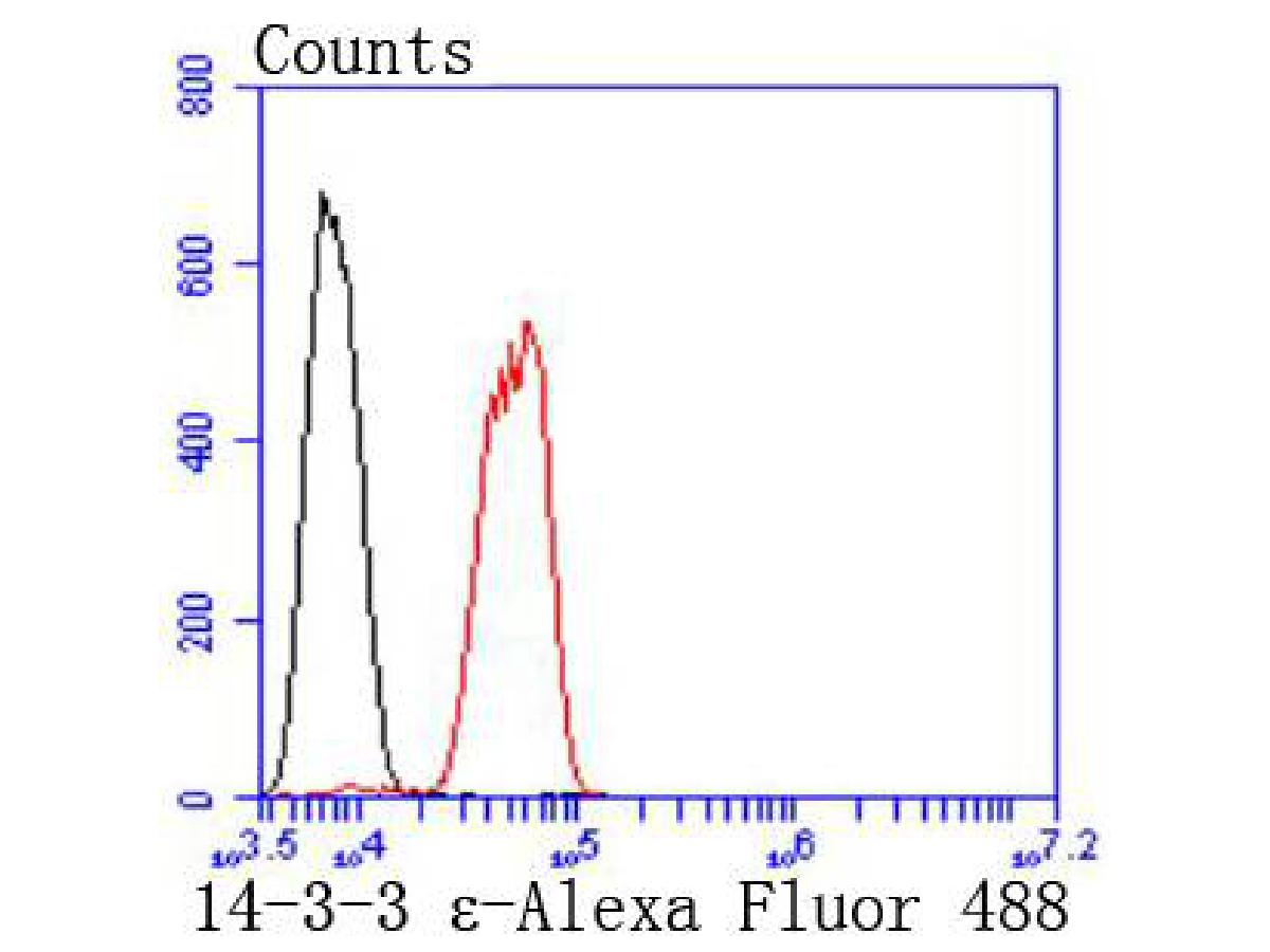 Flow cytometric analysis of SH-SY-5Y cells with 14-3-3 epsilon antibody at 1/50 dilution (red) compared with an unlabelled control (cells without incubation with primary antibody; black). Alexa Fluor 488-conjugated goat anti rabbit IgG was used as the secondary antibody.