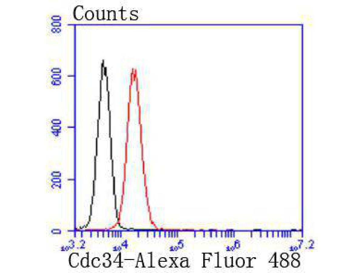 Flow cytometric analysis of Jurkat cells with Cdc34 antibody at 1/50 dilution (red) compared with an unlabelled control (cells without incubation with primary antibody; black). Alexa Fluor 488-conjugated goat anti rabbit IgG was used as the secondary antibody.