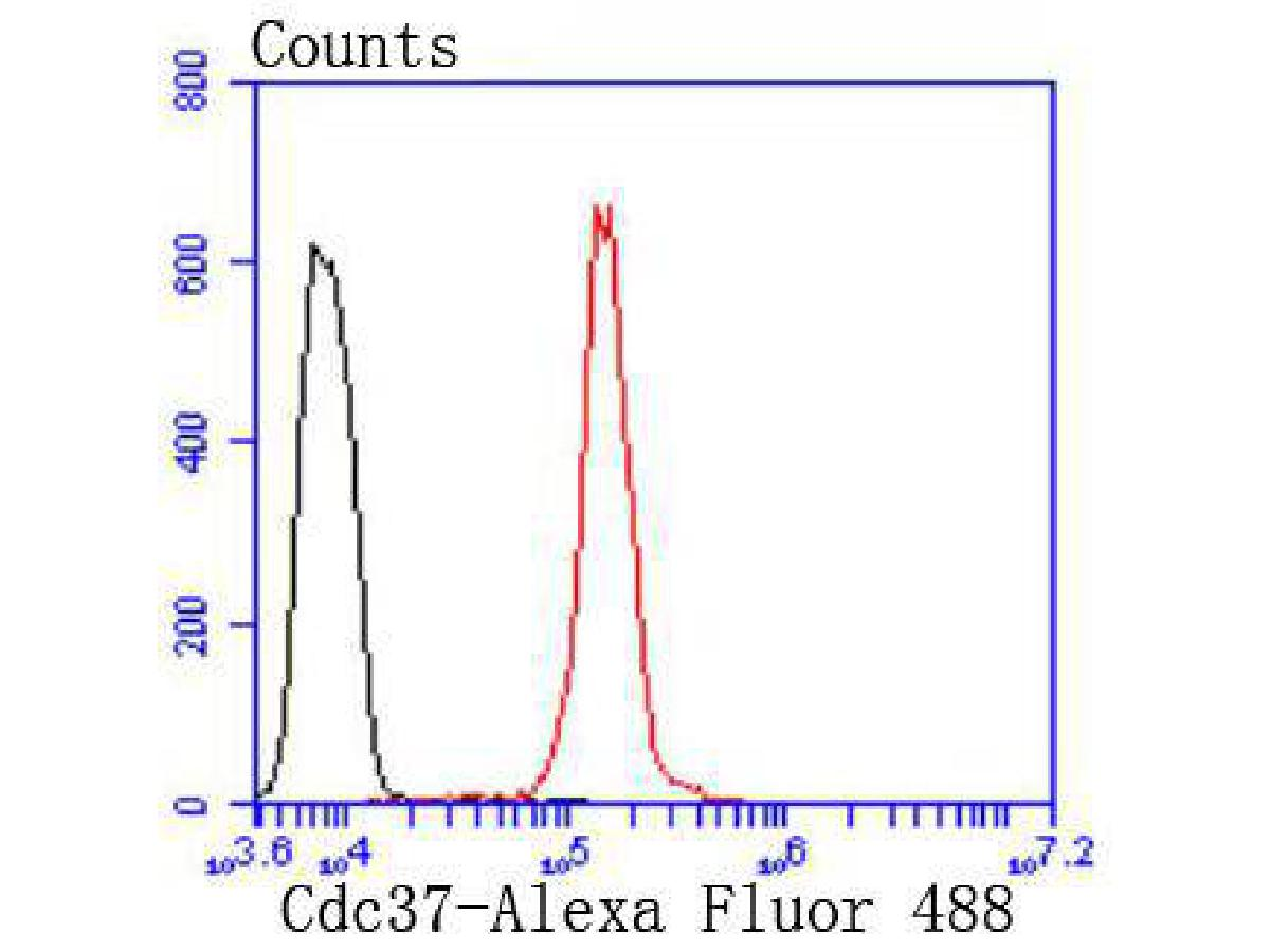 Flow cytometric analysis of Hela cells with Cdc37 antibody at 1/50 dilution (red) compared with an unlabelled control (cells without incubation with primary antibody; black). Alexa Fluor 488-conjugated goat anti rabbit IgG was used as the secondary antibody