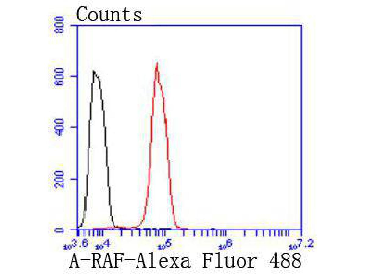 Flow cytometric analysis of A-RAF was done on Hela cells. The cells were fixed, permeabilized and stained with the primary antibody (ET1701-18, 1/50) (red). After incubation of the primary antibody at room temperature for an hour, the cells were stained with a Alexa Fluor 488-conjugated Goat anti-Rabbit IgG Secondary antibody at 1/1000 dilution for 30 minutes.Unlabelled sample was used as a control (cells without incubation with primary antibody; black).