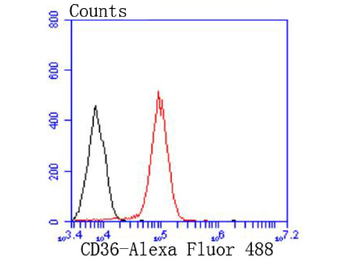 Flow cytometric analysis of CD36 was done on THP-1 cells. The cells were fixed, permeabilized and stained with the primary antibody (ET1701-24, 1/50) (red). After incubation of the primary antibody at room temperature for an hour, the cells were stained with a Alexa Fluor 488-conjugated Goat anti-Rabbit IgG Secondary antibody at 1/1000 dilution for 30 minutes.Unlabelled sample was used as a control (cells without incubation with primary antibody; black).
