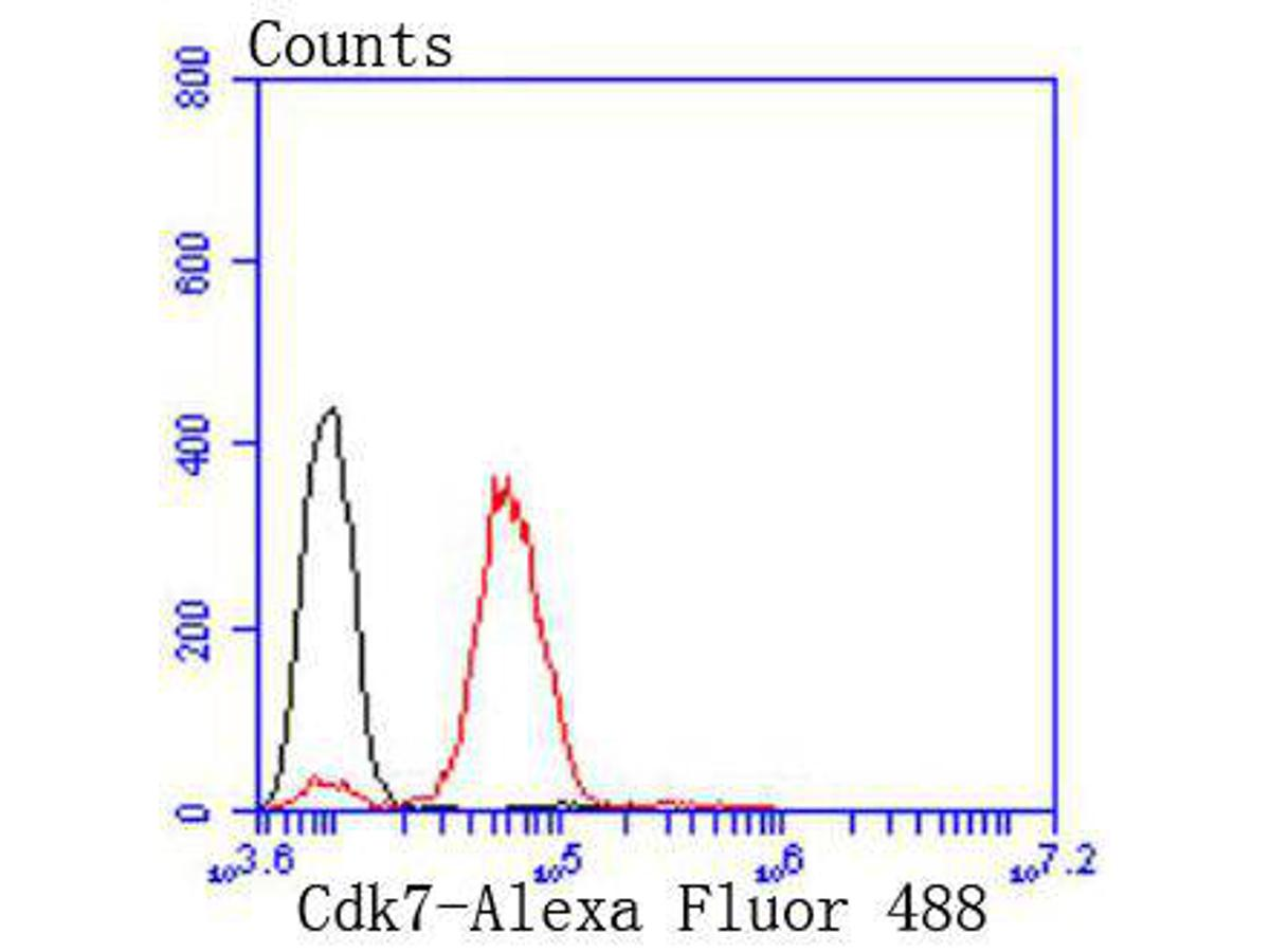 Flow cytometric analysis of A431 cells with Cdk7 antibody at 1/50 dilution (red) compared with an unlabelled control (cells without incubation with primary antibody; black). Alexa Fluor 488-conjugated goat anti rabbit IgG was used as the secondary antibody.