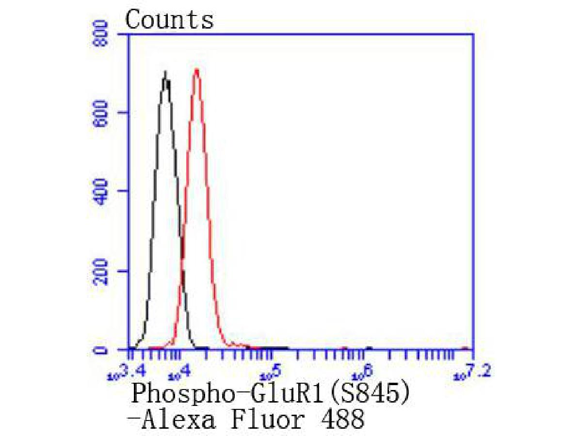 Flow cytometric analysis of Phospho-GluR1(S845) was done on N2A cells. The cells were fixed, permeabilized and stained with the primary antibody (ET1701-28, 1/50) (red). After incubation of the primary antibody at room temperature for an hour, the cells were stained with a Alexa Fluor 488-conjugated Goat anti-Rabbit IgG Secondary antibody at 1/1000 dilution for 30 minutes.Unlabelled sample was used as a control (cells without incubation with primary antibody; black).