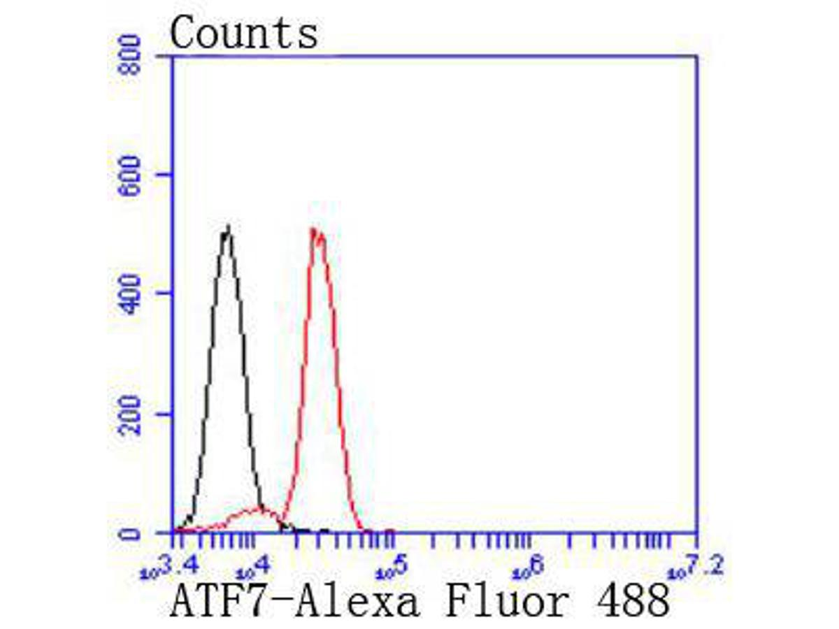 Flow cytometric analysis of Jurkat cells with ATF7 antibody at 1/50 dilution (red) compared with an unlabelled control (cells without incubation with primary antibody; black). Alexa Fluor 488-conjugated goat anti rabbit IgG was used as the secondary antibody