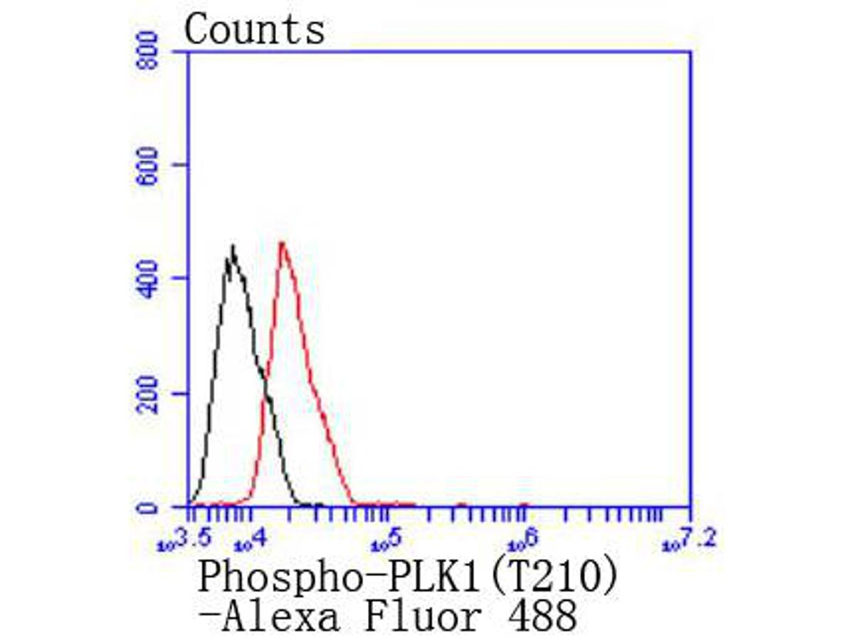 Flow cytometric analysis of MCF-7 cells with Phospho-PLK1(T210) antibody at 1/50 dilution (red) compared with an unlabelled control (cells without incubation with primary antibody; black). Alexa Fluor 488-conjugated goat anti rabbit IgG was used as the secondary antibody.