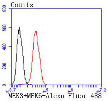 Flow cytometric analysis of Hela cells with MEK3+MEK6 antibody at 1/50 dilution (red) compared with an unlabelled control (cells without incubation with primary antibody; black). Alexa Fluor 488-conjugated goat anti rabbit IgG was used as the secondary antibody