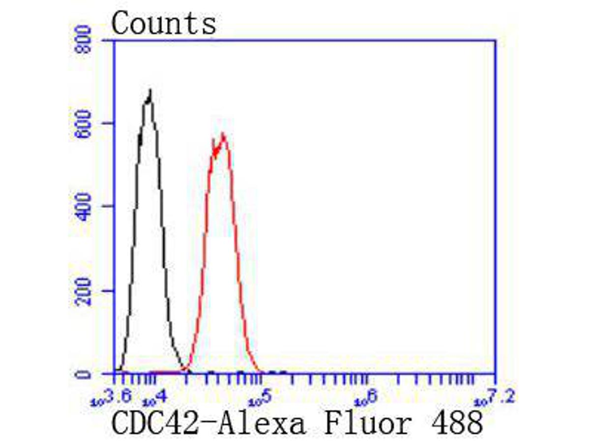Flow cytometric analysis of CDC42 was done on Hela cells. The cells were fixed, permeabilized and stained with the primary antibody (ET1701-7, 1/50) (red). After incubation of the primary antibody at room temperature for an hour, the cells were stained with a Alexa Fluor 488-conjugated Goat anti-Rabbit IgG Secondary antibody at 1/1000 dilution for 30 minutes.Unlabelled sample was used as a control (cells without incubation with primary antibody; black).