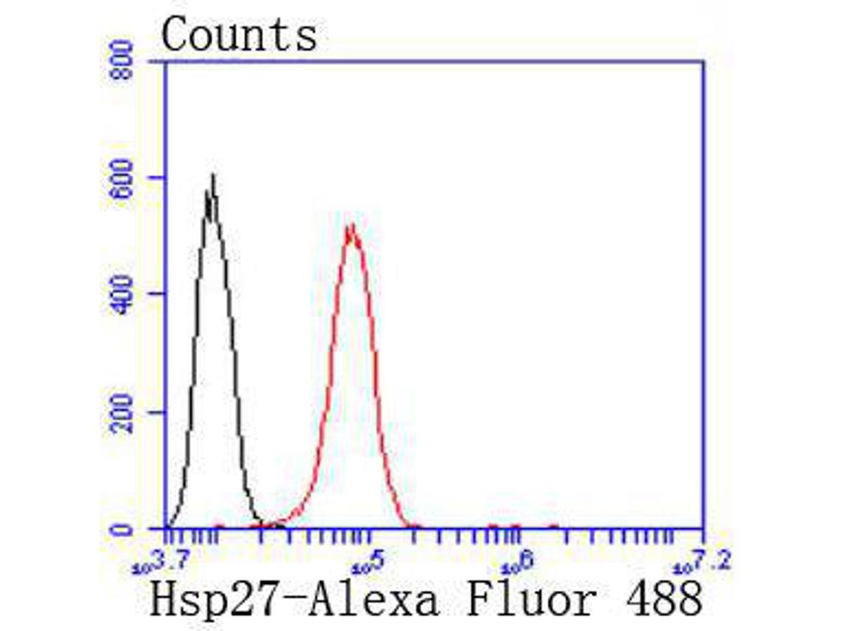 Flow cytometric analysis of Hsp27 was done on Hela cells. The cells were fixed, permeabilized and stained with the primary antibody (ET1701-70, 1/50) (red). After incubation of the primary antibody at room temperature for an hour, the cells were stained with a Alexa Fluor 488-conjugated Goat anti-Rabbit IgG Secondary antibody at 1/1000 dilution for 30 minutes.Unlabelled sample was used as a control (cells without incubation with primary antibody; black).