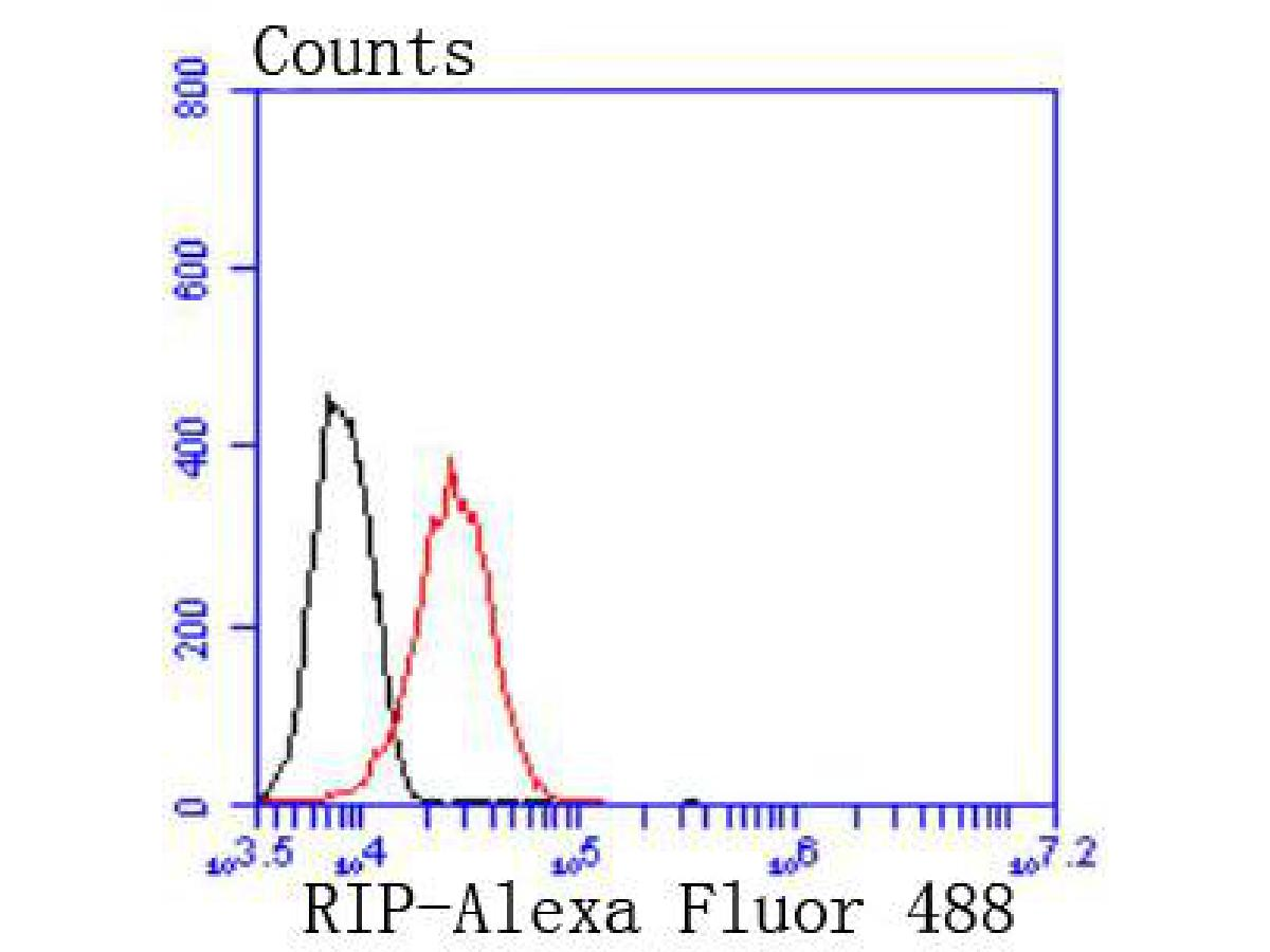 Flow cytometric analysis of 293 cells with RIP antibody at 1/50 dilution (red) compared with an unlabelled control (cells without incubation with primary antibody; black). Alexa Fluor 488-conjugated goat anti rabbit IgG was used as the secondary antibody