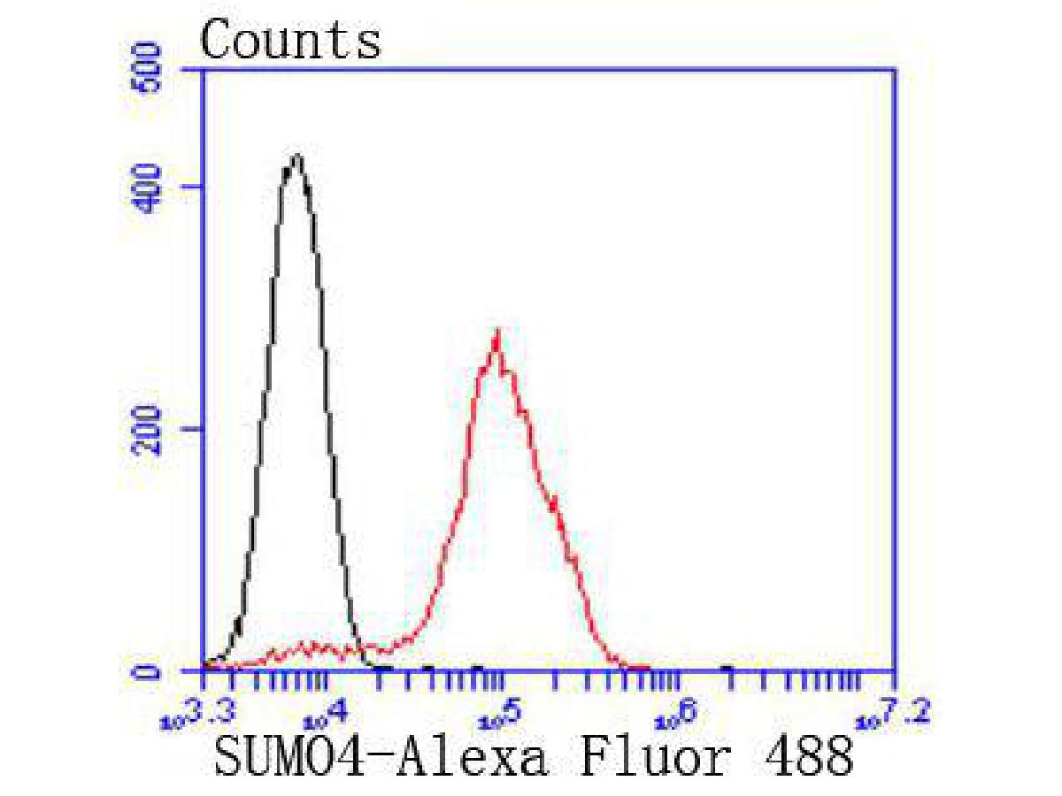 Flow cytometric analysis of 293 cells with SUMO4 antibody at 1/50 dilution (red) compared with an unlabelled control (cells without incubation with primary antibody; black). Alexa Fluor 488-conjugated goat anti rabbit IgG was used as the secondary antibody