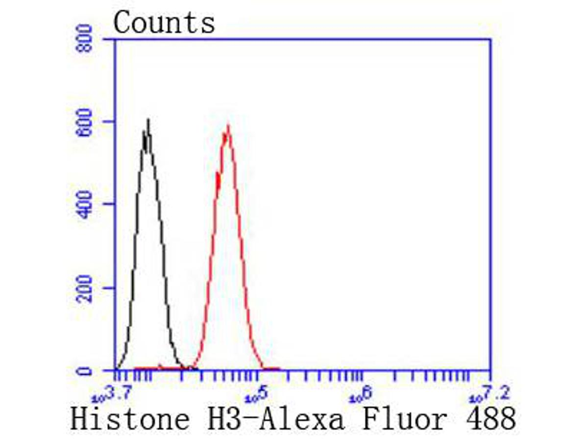 Flow cytometric analysis of Histone H3 was done on Hela cells. The cells were fixed, permeabilized and stained with the primary antibody (ET1701-81, 1/50) (red). After incubation of the primary antibody at room temperature for an hour, the cells were stained with a Alexa Fluor 488-conjugated Goat anti-Rabbit IgG Secondary antibody at 1/1000 dilution for 30 minutes.Unlabelled sample was used as a control (cells without incubation with primary antibody; black).