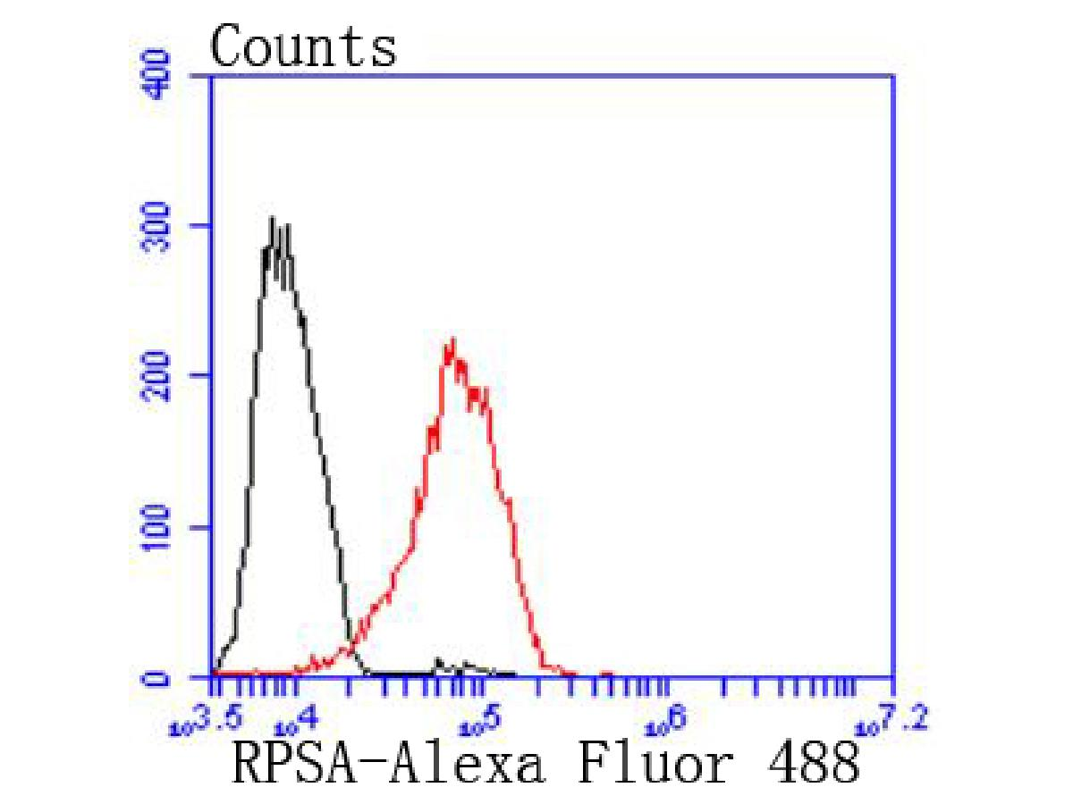 Flow cytometric analysis of MCF-7 cells with RPSA antibody at 1/50 dilution (red) compared with an unlabelled control (cells without incubation with primary antibody; black). Alexa Fluor 488-conjugated goat anti rabbit IgG was used as the secondary antibody.