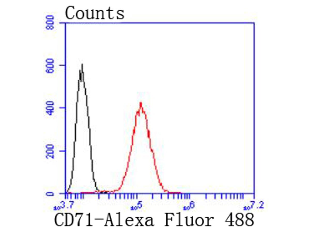 Flow cytometric analysis of Transferrin Receptor (CD71) was done on Hela cells. The cells were fixed, permeabilized and stained with the primary antibody (ET1702-06, 1/50) (red). After incubation of the primary antibody at room temperature for an hour, the cells were stained with a Alexa Fluor 488-conjugated Goat anti-Rabbit IgG Secondary antibody at 1/1000 dilution for 30 minutes.Unlabelled sample was used as a control (cells without incubation with primary antibody; black).
