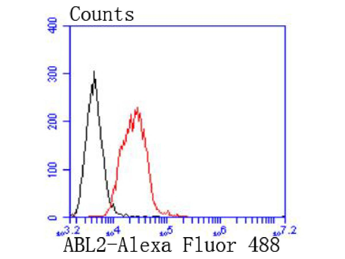 Flow cytometric analysis of Raji cells with ABL2 antibody at 1/50 dilution (red) compared with an unlabelled control (cells without incubation with primary antibody; black). Alexa Fluor 488-conjugated goat anti rabbit IgG was used as the secondary antibody