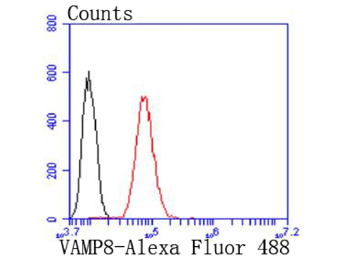 Flow cytometric analysis of Hela cells with VAMP8 antibody at 1/50 dilution (red) compared with an unlabelled control (cells without incubation with primary antibody; black). Alexa Fluor 488-conjugated goat anti rabbit IgG was used as the secondary antibody.