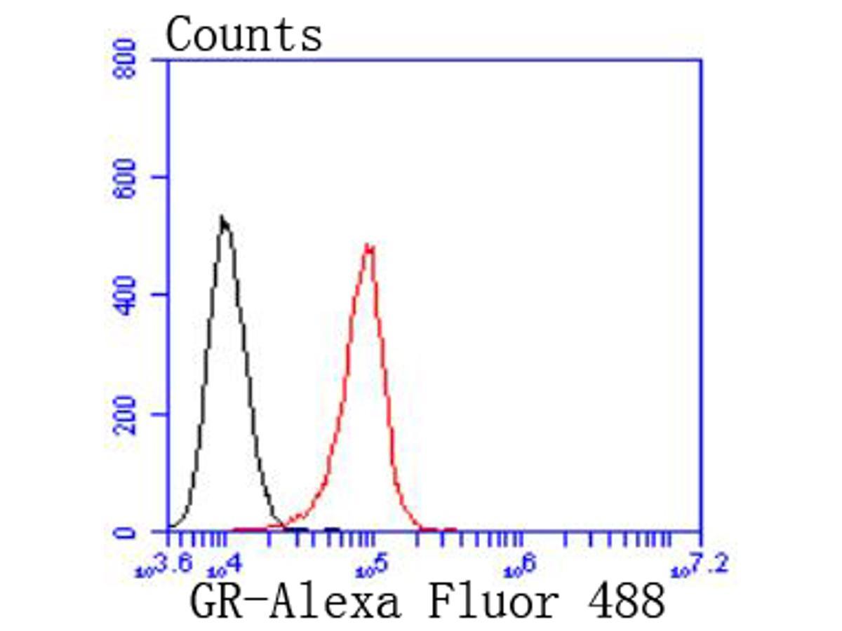 Western blot analysis of Glucocorticoid Receptor on hybrid fish (crucian-carp) heart tissue lysate using anti-Glucocorticoid Receptor antibody at 1/500 dilution.